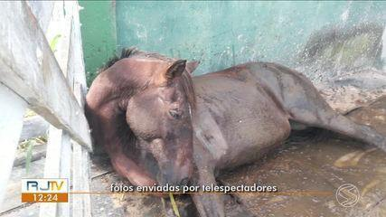 Maus tratos a animais: seis cavalos foram baleados e cinco morreram em Valença