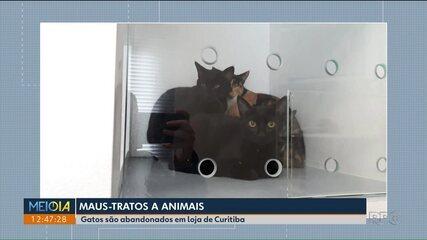 Gatos são abandonados em loja de Curitiba
