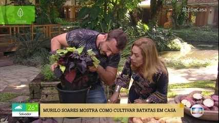 Murilo Soares ensina técnica para cultivar batatas em casa