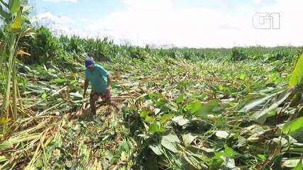 Apenas uma parte da plantação da fazenda foi afeitada, de acordo com os moradores