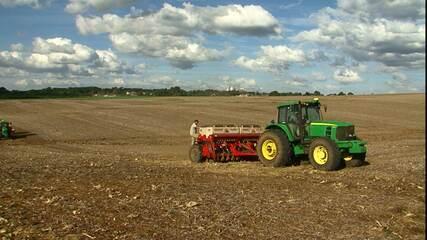 Reta final do plantio da cevada e o clima colabora