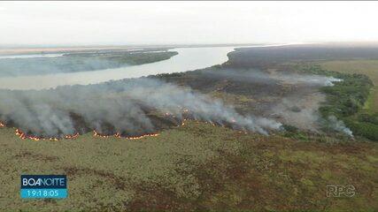Animais buscam abrigo enquanto incêndio devasta o Parque Nacional de Ilha Grande