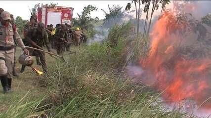 Forças Armadas atuam no Pará, região com mais focos de queimadas