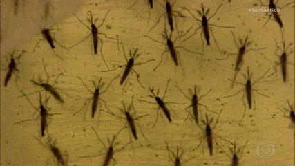 Cientistas estudam por que NE foi região com mais casos de microcefalia associados a zika