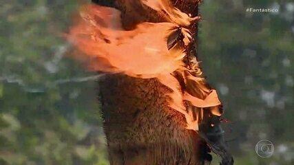 Dados do Inpe mostram que número de focos de incêndio no Brasil aumentou em agosto