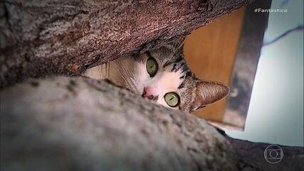 Gato fica quase três anos em árvore e vira atração turística