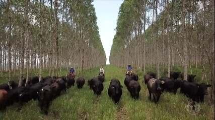 Globo Rural: Produtores rurais do Pará tentam manter preservação na Amazônia