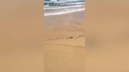 Manchas de óleo voltam a aparecer em praias do RN