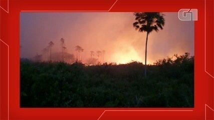 Queimadas voltam ao Pantanal de MS e governo resume em 'devastador'