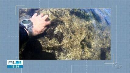 Óleo é encontrado em corais em Japaratinga, AL