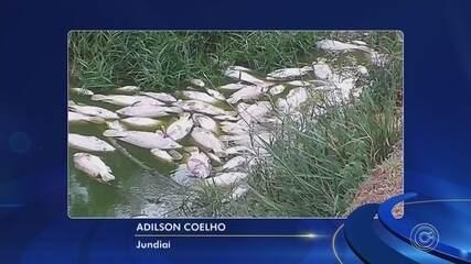 Peixes são encontrados mortos em parque botânico de Jundiaí