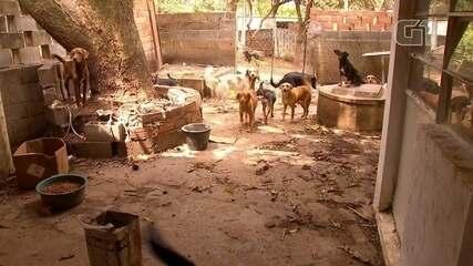 Casal de idosos morre e deixa 80 animais de estimação na casa