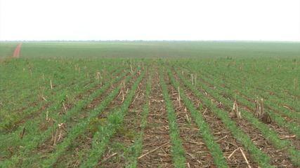 Mirante Rural mostra rotina de agricultores no período de estiagem no MA