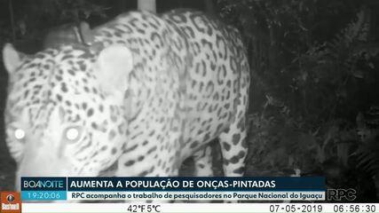 Aumenta o população de onças-pintadas no Parque Nacional do Iguaçu