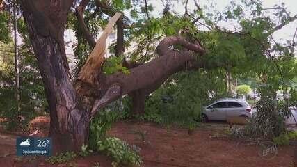 Queda de árvore impede passagem de veículos na zona Leste de Ribeirão Preto