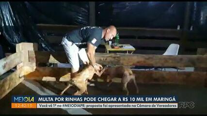 Multa por rinhas pode chegar a R$ 10 mil em Maringá