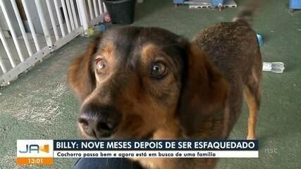 Depois de se recuperar, cachorro Billy busca uma família