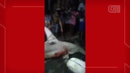 Tubarão-martelo é encontrado em rede de pescadores na praia do Titanzinho, em Fortaleza