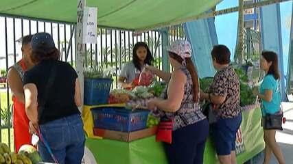 Vendas de alimentos orgânicos aumentam no Brasil nos últimos anos