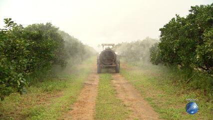 G1 no Campo: Ministério da Agricultura libera o uso de mais 16 agrotóxicos nas lavouras