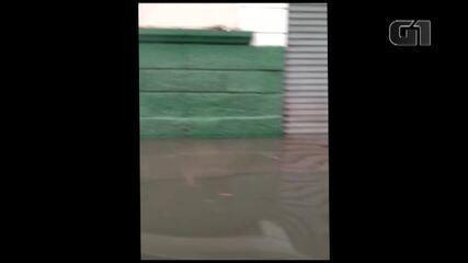 Maré alta e chuva deixam diversos pontos de alagamento em Belém