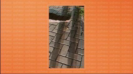 Ivete Sangalo encontra cobra no jardim de sua casa