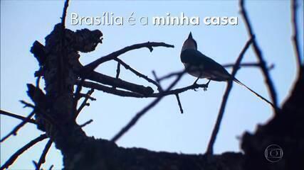 """""""Indicada ao Oscar"""", homenagem de hoje ao 60 anos de Brasília"""
