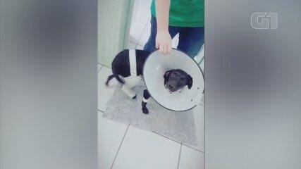 Cachorro atropelado e deixado agonizado é salvo por técnica de enfermagem