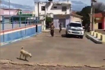 Cães são capturados e agredidos a pauladas em Jacobina do Piauí