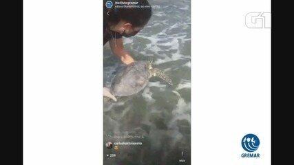 Tartaruga é solta em praia deserta de Guarujá por causa da pandemia