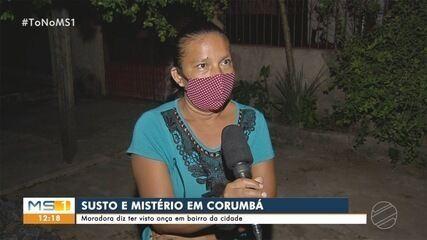 Moradora de Corumbá diz ter visto onça em bairro da cidade