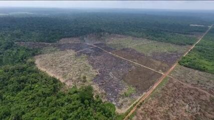 Brasil deve aumentar emissões de gases do efeito estufa mesmo na pandemia, diz estudo