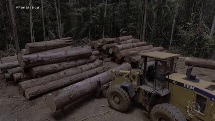 Relatório inédito mostra que 99% do desmatamento feito no Brasil em 2019 foi ilegal