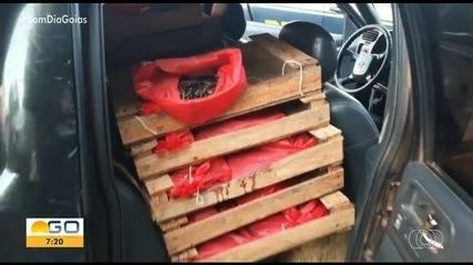 Homem é flagrado transportando 13 mil minhocuçus em Uruaçu