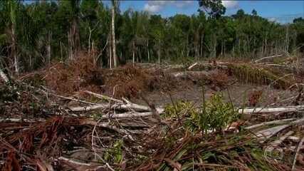 Salles revoga despacho que permitia cancelar infrações ambientais na Mata Atlântica