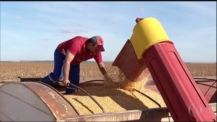 Produtores começam a colheita do milho de segunda safra em Goiás