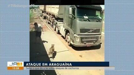 Jovem tenta salvar cão de estimação de ataque de pit bull em Araguaína