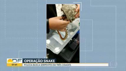 Polícia apreende mais uma cobra no DF em operação contra tráfico de animais