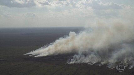 Ambientalistas denunciam incêndios florestais criminosos no norte de Mato Grosso