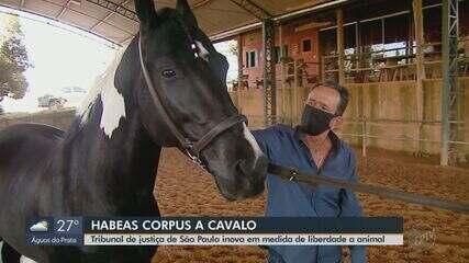 Tribunal de Justiça de São Paulo inova e concede 'habeas corpus' a cavalo