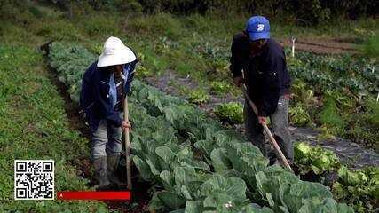 Brasil tem 15 milhões de pessoas trabalhando no campo
