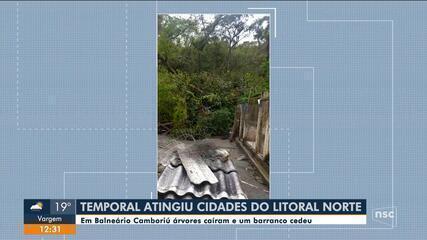 Balneário Camboriú registra quedas de árvores com tempestade