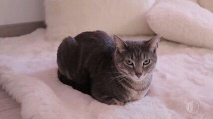 'Momento Mais Diário': comportamento felino na quarentena