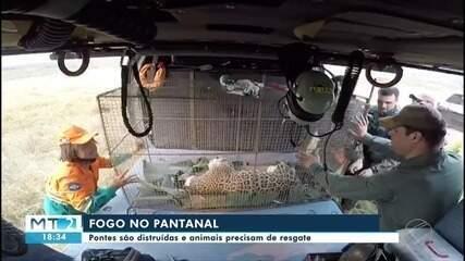 Queimadas ameaçam fauna, flora e pontes no Pantanal
