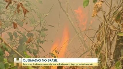 Pantanal é o bioma brasileiro proporcionalmente mais afetado por queimadas em agosto