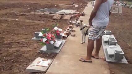Cão visita túmulo da mãe de sua dona em Teresina, vítima da Covid-19