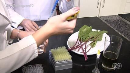 Folha da beterraba pode conter muitos elementos nutritivos para o ser humano