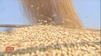 Saca da soja atinge valores históricos e as exportações crescem 30%