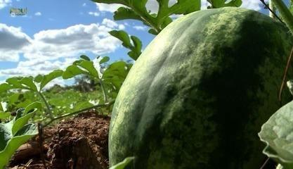 Jatobá do Piauí é famosa pela grande safra de melancia e festa da melancia já é tradição