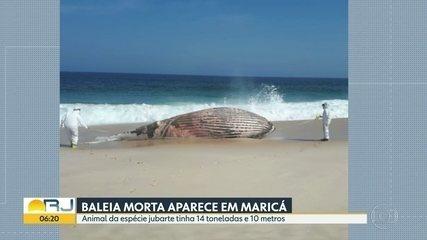 Baleia morta aparece em Maricá